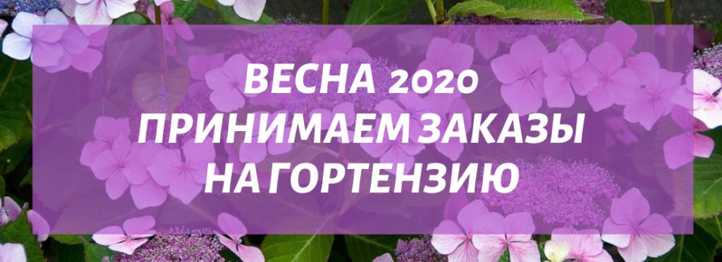 Царство цветов интернет магазин многолетних цветов